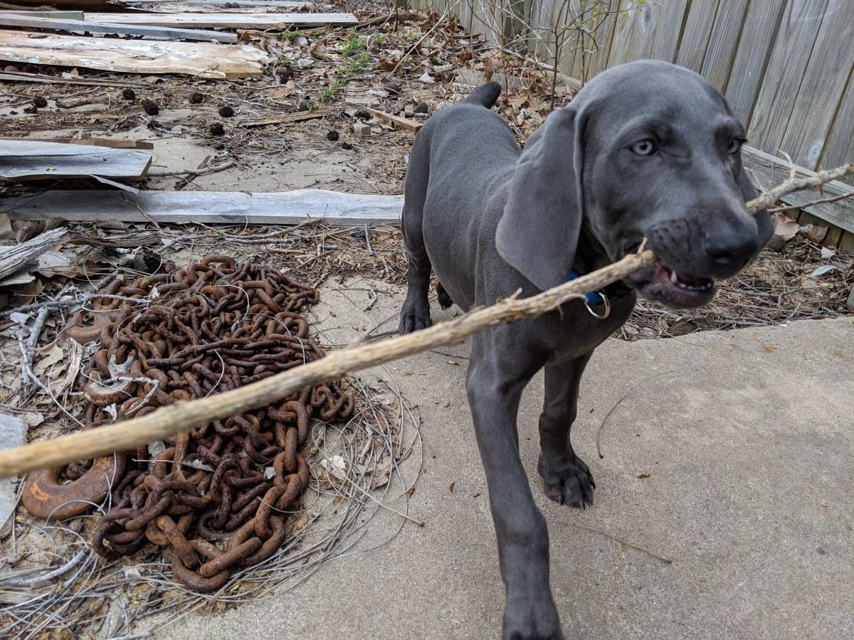 Deets: A PuppyDog